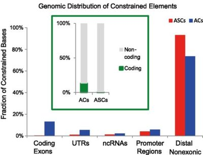 Genomic Distribution of Constrained Elements