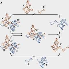 organic molecule reaction cycles?