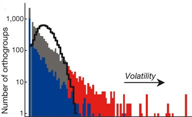 orthogroup volatility