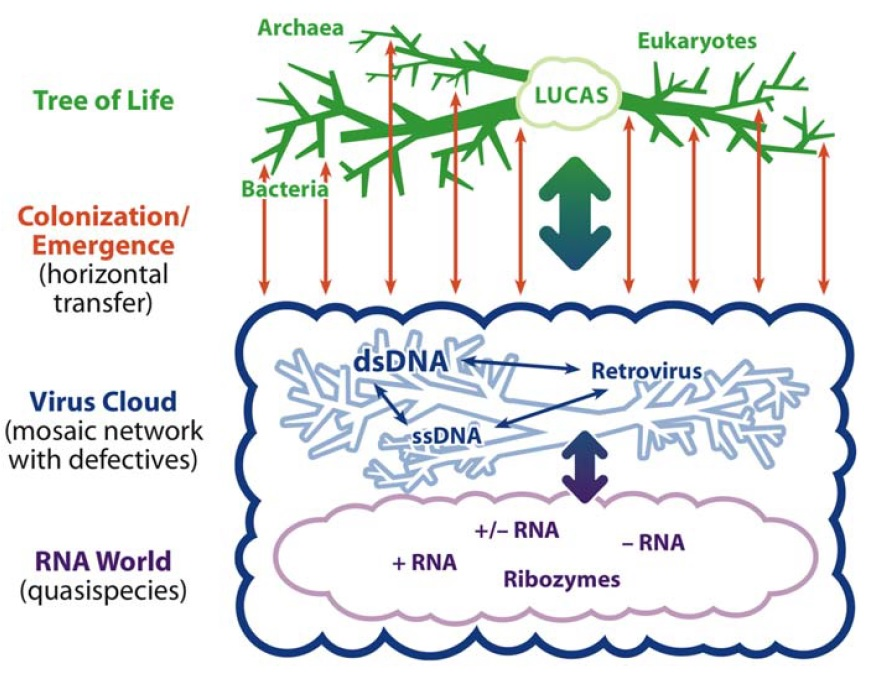 Viruses are essential agents within the roots and stem of the tree of life